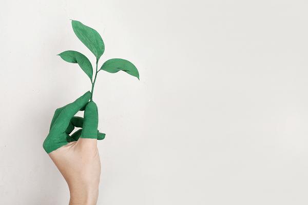 Making an eco friendly home   GotProperty