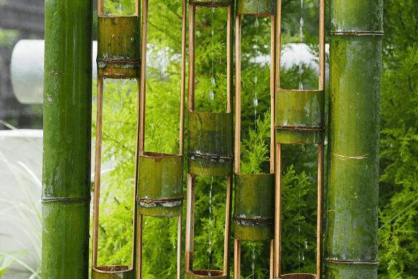 Bamboo palm indoor plant   GotProperty