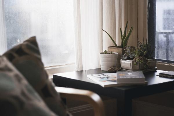 Indoor Plants | GotProperty