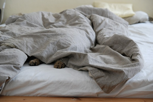 Plain duvet cover for your bedroom   GotProperty