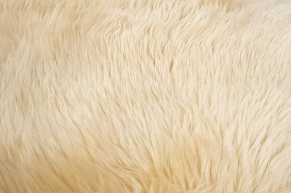 Maintain your carpet | GotProperty