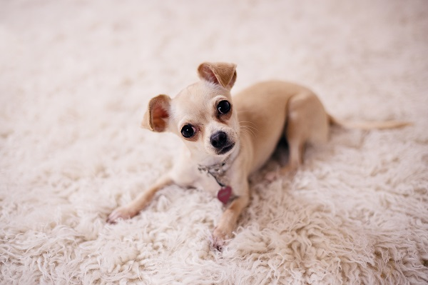 Choosing a new carpet for your home   GotProperty